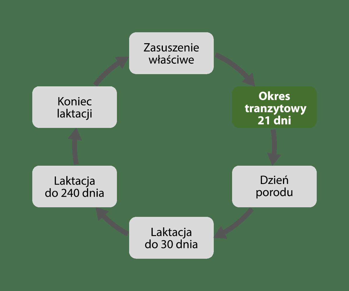 okres tranzytowy - EMIWO